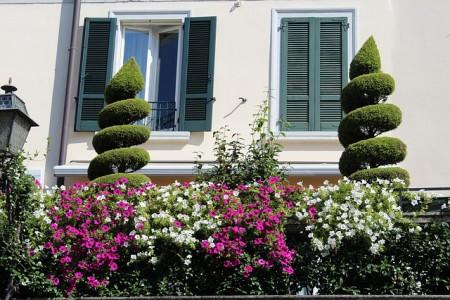 iglaki na balkonie